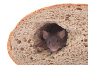 Mouse in bread loaf